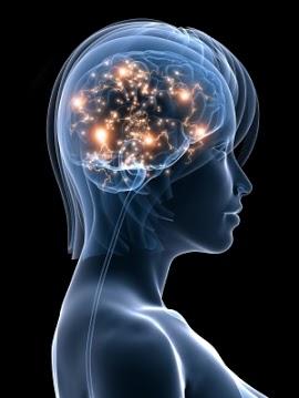 Brain immune 2